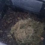 Compost-septiembre-9