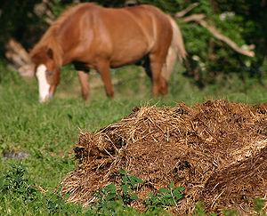 Materiales para compostar: estiércol de caballo