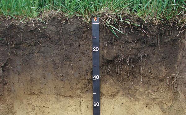 Compost como enmienda biológica de suelos