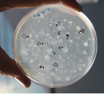 Aislamiento de bacterias