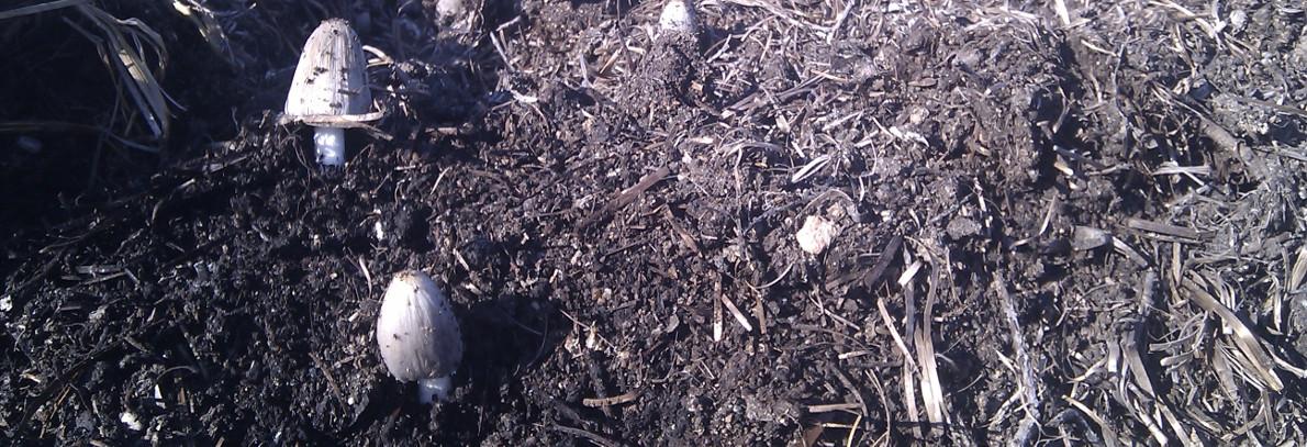 Uso del compost en la agricultura